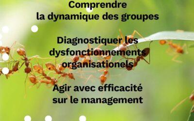 Le management organisationnel